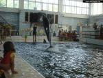 Dolphinariums, Water Parks